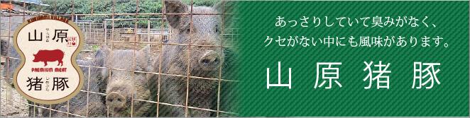 山原猪豚(やんばるいのぶた)